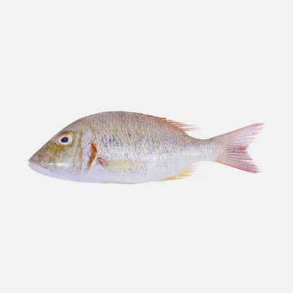 Picture of Fresh Sheri Fish 1KG