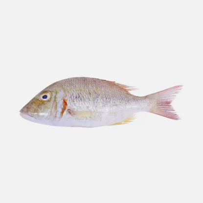 Picture of Fresh Sheri Emperor Fish